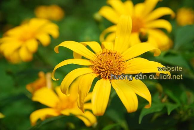 Trong tháng 10 và 11 là hoa nở rộ