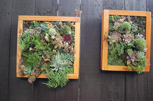 Il giardino sfumato quadri vegetali for Quadri per pareti