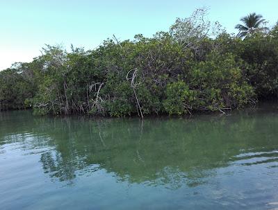 Manglares, Isla Saona, República Dominicana, vuelta al mundo, round the world, mundoporlibre.com