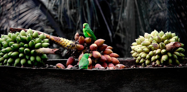 Bananas Fruits Parrots Birds HD Wallpaper