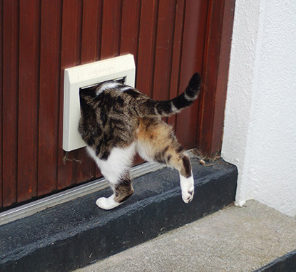 Cat walking in cat flap