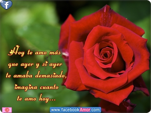 Rosas Rojas Con Frases De Amor: Nombres De Rosas Rojas