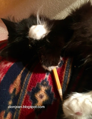 Maggie the cat drops her pencil