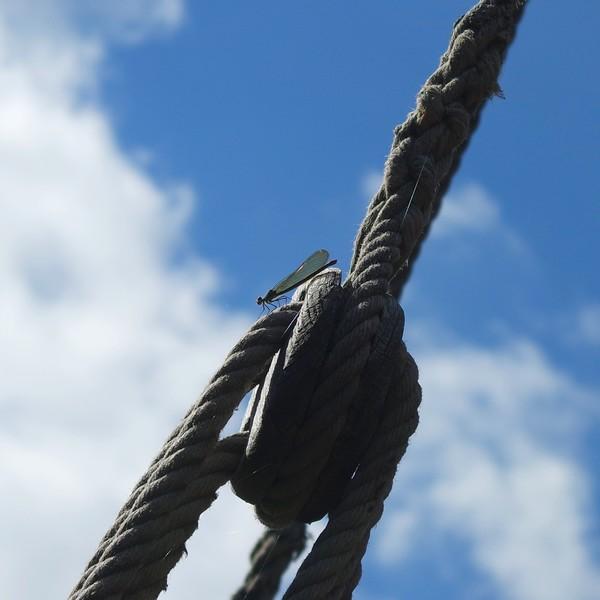 france corrèze beaulieu-sur-dordogne dordogne gabare