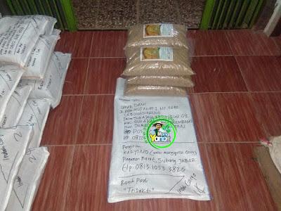 Benih pesanan  UMAR DANI Palembang, Sumsel.   (Sebelum Packing)