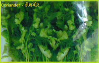 Coriander Kitchen Garden Seeds