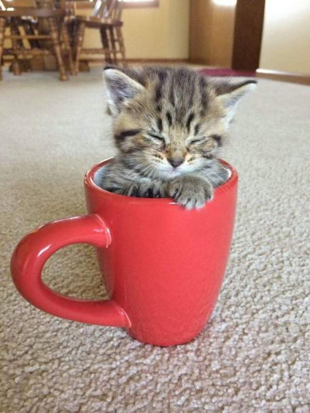 Funny cats - part 315, best funny cat gif, cat photos, cat cute picture