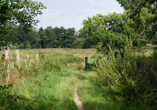 5 Spielplätze im Kieler Süden mit dem gewissen Extra. Der Tröndelsee liegt in einem Naturschutzgebiet mitten in Kiel.