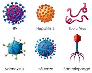 Pengertian Tentang Virus dan Macam -Macam Virus Beserta Contohnya Paling Lengkap