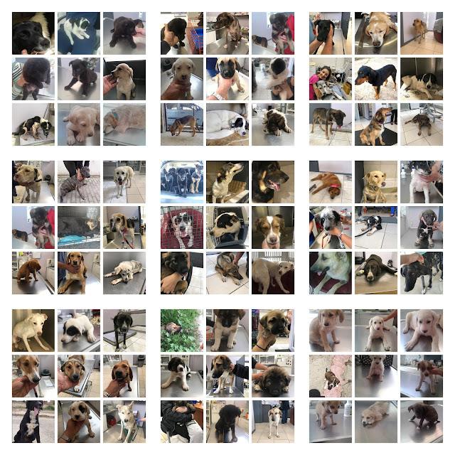 Ο Δήμος Ναυπλιέων μεριμνά για την Ευζωία και την Προστασία των αδέσποτων ζώων