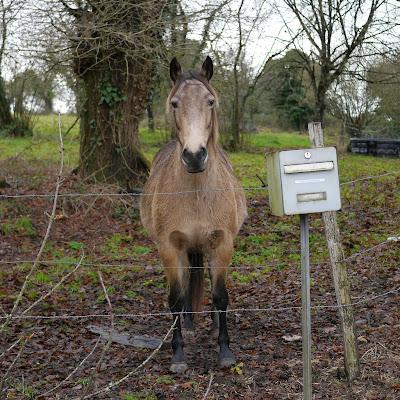 écrivez à ce cheval triste....
