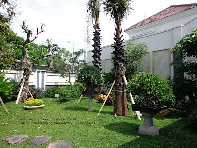 jasa tukang taman klasik tropis surabaya barat | www.jasataman.co.id