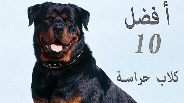 أفضل 10 أنواع من كلاب الحراسة فى العالم