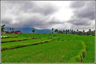 Pupuan Panorama