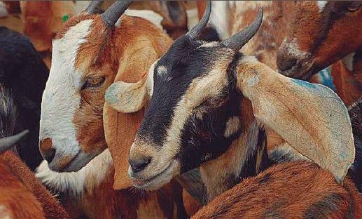 Furto de equipamentos agrícolas e matança de animais na zona rural de Elesbão Veloso; proprietários denunciam prejuizos
