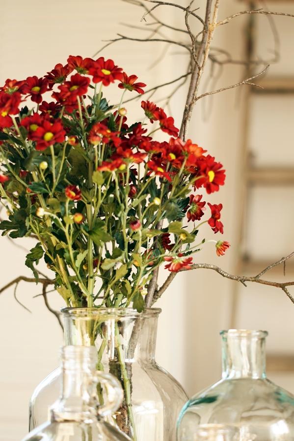 Blog + Fotografie by it's me! - dunkelrote Chrysanthemen im Sonnenschein
