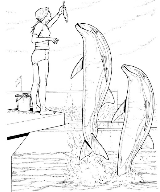 Coloring Pages Of Dolphins Coloring Pages Of Dolphins Auromas Line Drawings