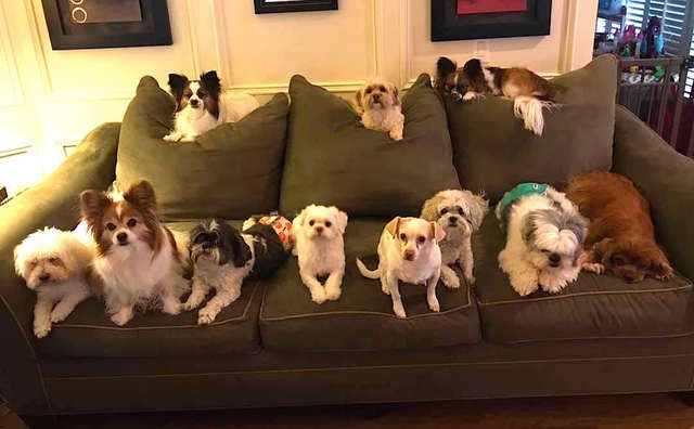 11 Dogs Sat Perfectly Still For The Most Adorable Family Portrait Ever
