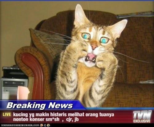 Kicauangsa Kumpulan Meme Kucing Paling Gokil dan Menggelikan