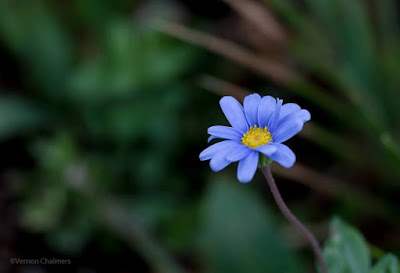 Small flower Photography : Canon EOS 6D / Canon EF 50mm f/1.8 STM Lens