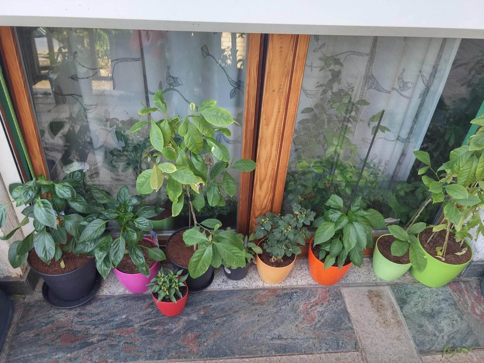 Urbani vrt 2.dio - uzgoj povrća u vrećama, žardinjerama i posudama