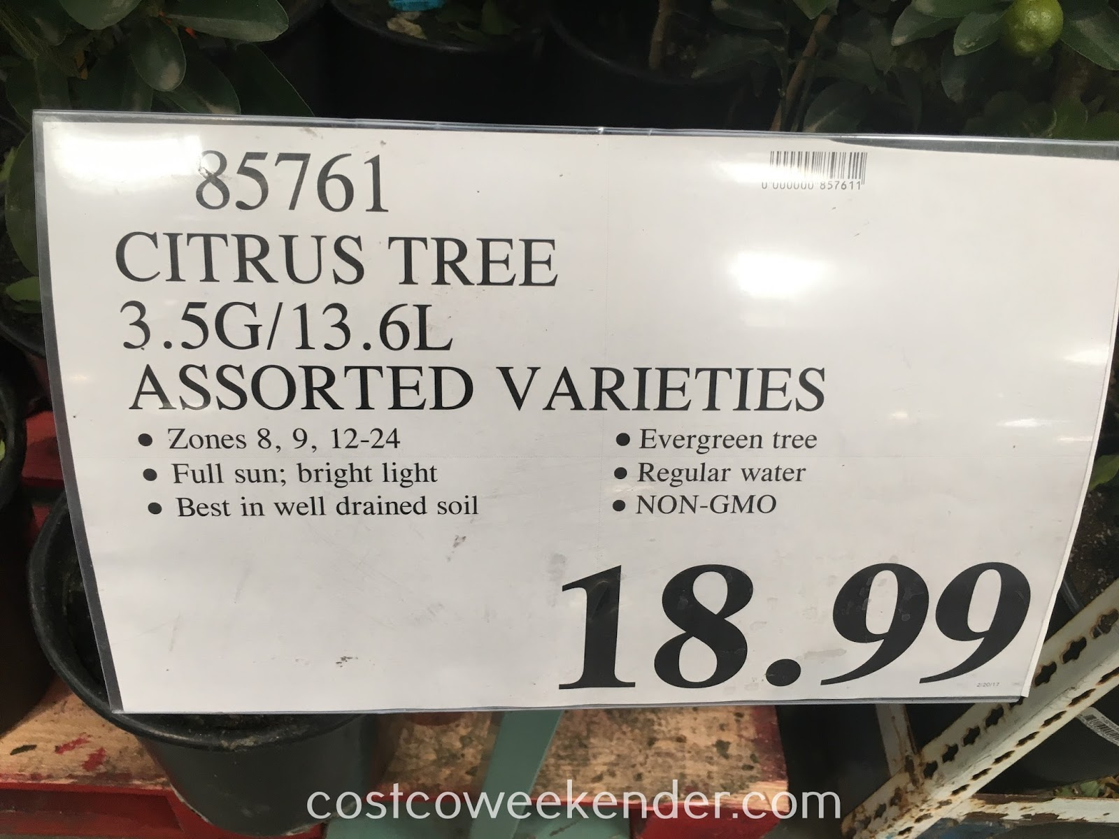 Deal for assorted varieties of citrus fruit trees at Costco