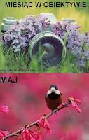 http://misiowyzakatek.blogspot.com/2016/05/miesiac-w-obiektywie-maj.html