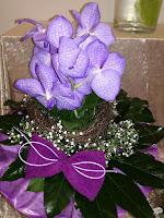 Blumenladen Orchidee