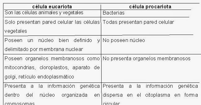 Cuadro comparativo eucariota procariota in english