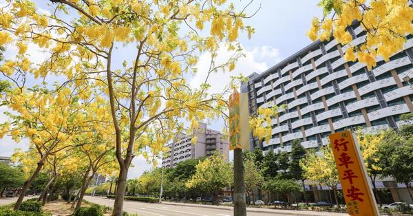台中南區|興大路綠園道黃金阿勃勒大道,自行車人行步道賞花好方便