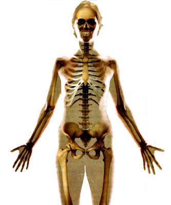 Datos sistema esquelético tejido óseo estudio anatomía
