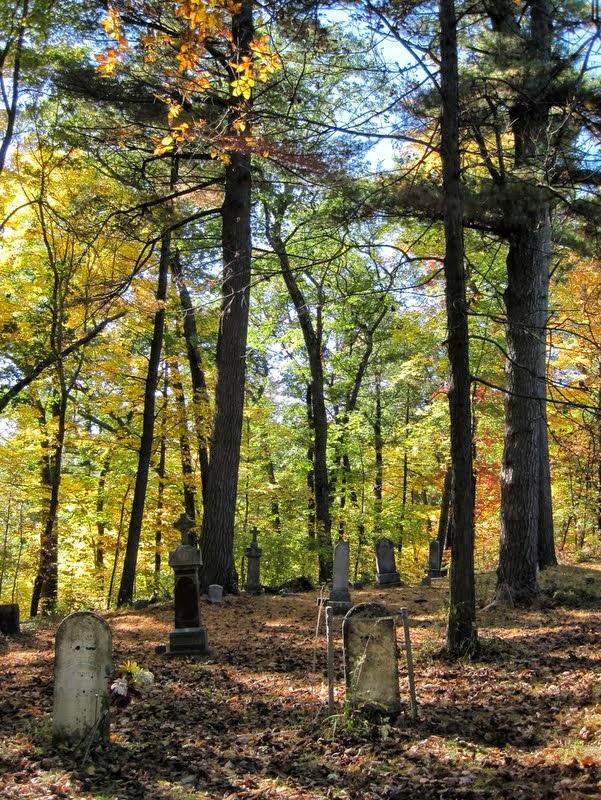 Ground Needles Cover Looks Pine