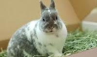 Penyebab Kelinci Hilang Nafsu Makan dan cara penanganannya