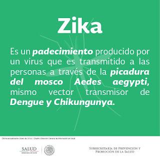 ¿Mosquito común transmite Zika?