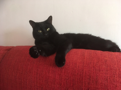 black cat on sofa