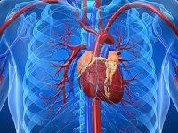 kalbi güçlendirici besinler