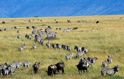 Fauna hutan sabana - berbagaireviews.com