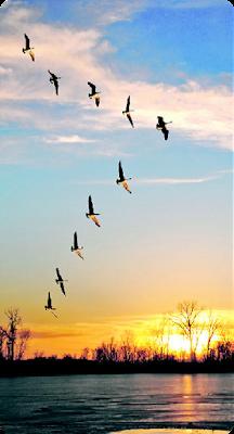 Păsări călătoare