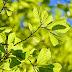 Hoe krijgt grootschalige zon-PV op een mooie manier plek in onze leefomgeving?