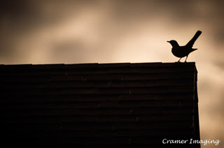 Cramer Imaging's professional quality nature animal photograph of a silhouetted bird standing on a rooftop in Pocatello, Bannock, Idaho