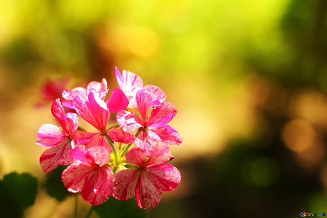 اجمل ورود, اجمل ورود الحب, اجمل ورود في العالم, ورد احمر, ورد وشوك, ورد ياسمين, وردة جميلة, Pictures of roses, اجمل الورود الطبيعية
