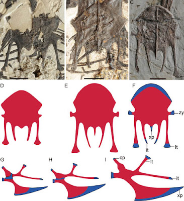 Histological analysis reveals ontogenetic variation in early birds