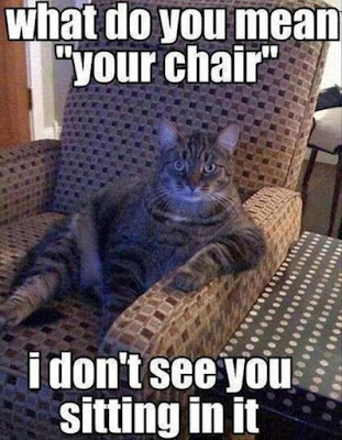 Funny Animal Meme For You To Laugh Loud  #funny #funnymemes #funnyanimals #hilarious #hilariousmemes #jokes #lol
