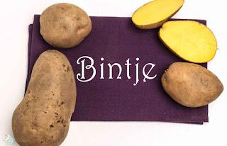 Kartoffelsorte Bintje