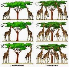 Sejarah Munculnya Teori Evolusi