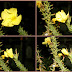 Subhanallah !! Bunga Ini Bermekaran Saat Di Kumandangkan Azan