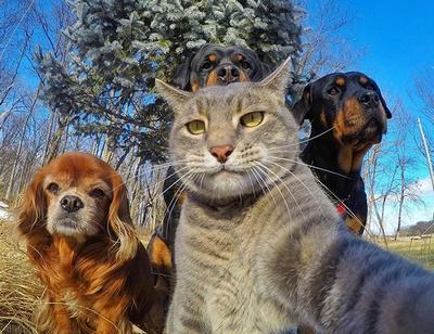 Selfies engraçados de animais
