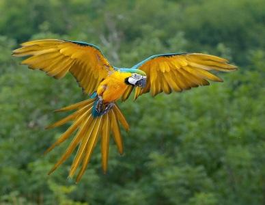 Mükemmel Görünen 10 Papağan Türü