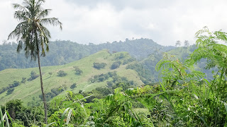 Lush thick jungle in Sao Tome