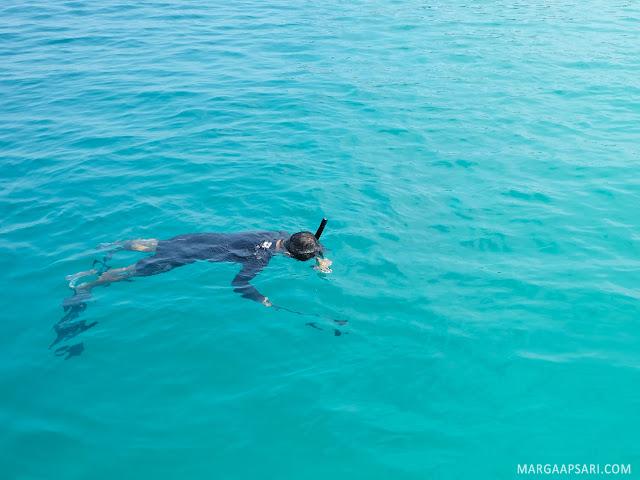 Open Trip ke Pulau Peucang - Snorkeling